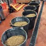 The day's spent grain destined for some hungry cow's belly.